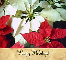 Mixed Color Poinsettias 2 Happy Holidays S2F1 by Christopher Johnson