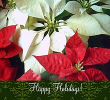 Mixed Color Poinsettias 2 Happy Holidays S6F1 by Christopher Johnson