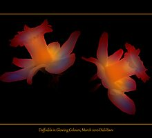 Daffodils in Glowing Colours by didibaev
