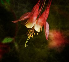 Columbine Orange Woodland Beauty by Lee Craig