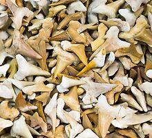 Sharks Teeth by Steven Ralser