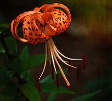 Turk's Cap Lily II by Lee Craig