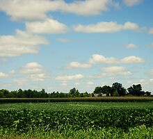 Midwest Field and Sky by Kimberose