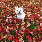 A Westie Fall by MarianBendeth