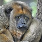 Howler Monkey by venny