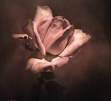 Rose by Jan Pudney