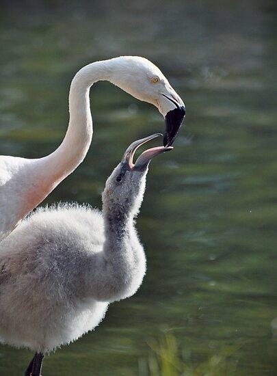 Flamingos by venny