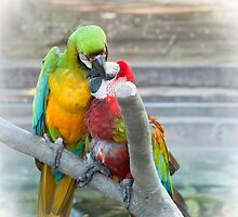 Parrots by julie08
