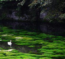 Swan Lake by Simon Kirwin