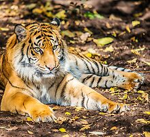 Big Cat I by Ray Warren