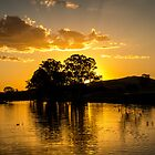 Golden pond by Brent Randall