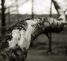 Tree Branch by fotohebden