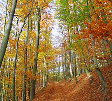 Path in autumn forest by Brevis