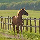 Chestnut Foal by blueinfinity