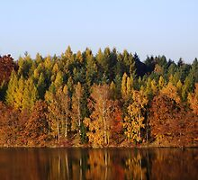 Autumn at the Lake by Brevis