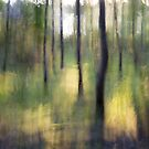 Woodland Impressions by Alf Myers