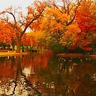 Duck pond in autumn by Robert Brown