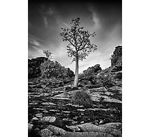 Boab on a Hill Photographic Print