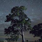 Melrose Tree and Jupiter by pablosvista2