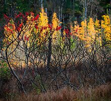 Sumacs and Tamaracks by Nazareth