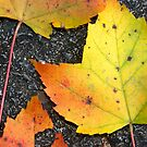 Leaves on asphalt - 2009 by Joseph Rotindo
