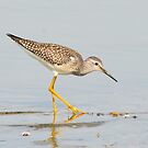 Lesser Yellowlegs by Nancy Barrett