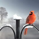 Canadian Cardinal by Igor Zenin