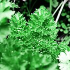 Parsley  by PictureNZ