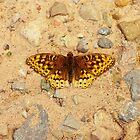 Butterfly Landing by Katya laRoche