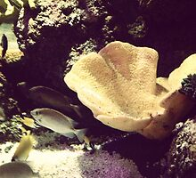 Aquarium by terrigardner