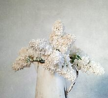 White Lilac by Jill Ferry