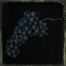 Tintype Grapes by Jill Ferry