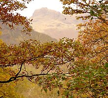 From Chapel Stile Quarry Woods .. by Mike  Waldron