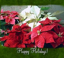 Mixed color Poinsettias 3 Happy Holidays P1F1 by Christopher Johnson
