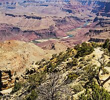 View from Yavapai Point, Grand Canyon, Arizona, USA by TonyCrehan