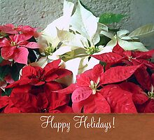 Mixed color Poinsettias 3 Happy Holidays S1F1 by Christopher Johnson