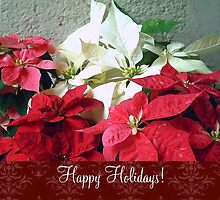 Mixed color Poinsettias 3 Happy Holidays S5F1 by Christopher Johnson