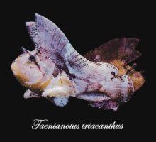 Leaf Scorpionfish (Taenianotus triacanthus) by Hoyo12