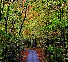 Country Road by Terri~Lynn Bealle