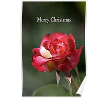 merry christmas- red-white-rose Poster
