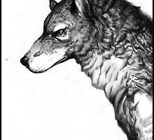 Grey wolf by Furiarossa