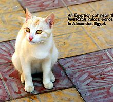 An Egyptian Cat by Laurel Talabere