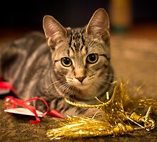 Christimas Ribbons by Mikell Herrick