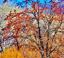 Colorfall by marilyn diaz