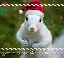 White squirrel Christmas by Owed to Nature