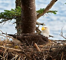 Eagle Eye by TedRaynorPhotos