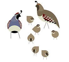 Quail Family by Scott Partridge