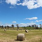 Hagley paddocks - summertime 2013 by gaylene