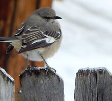 MOCKINGBIRD (4) by pepperandy