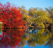 Fall foliage in Los Gatos by wd-photo